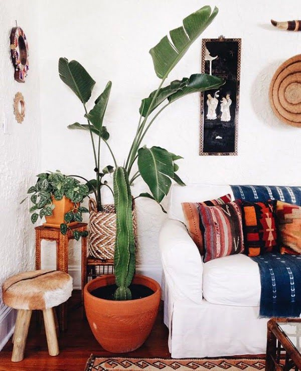 Liven Up Space with Houseplants
