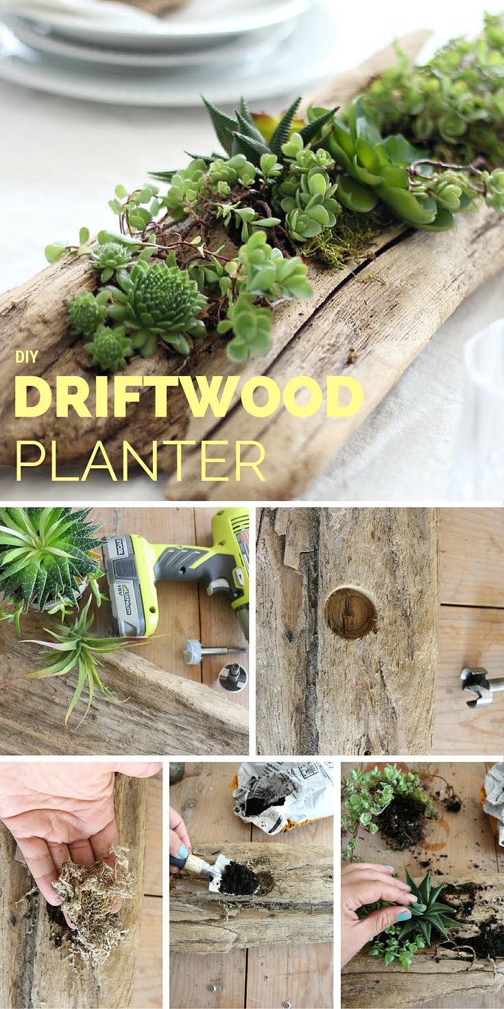 Check out the tutorial: DIY Driftwood Planter #DIY #homedecor #crafts
