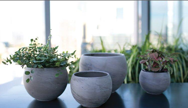 Source: www.gardenology.com