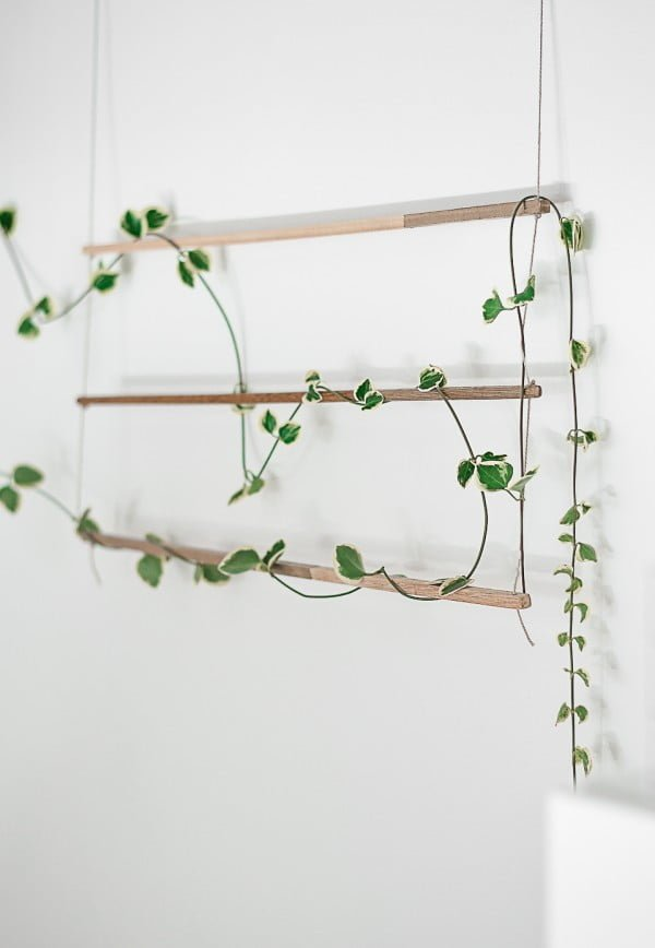 Check out how to make an easy DIY indoor trellis for climbing vine