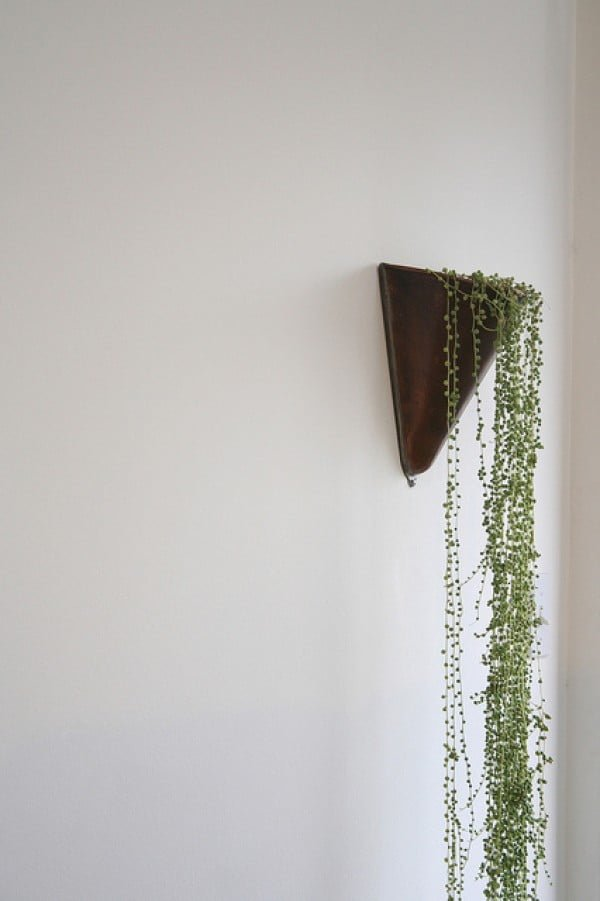 Lovely wall mounted vine planter