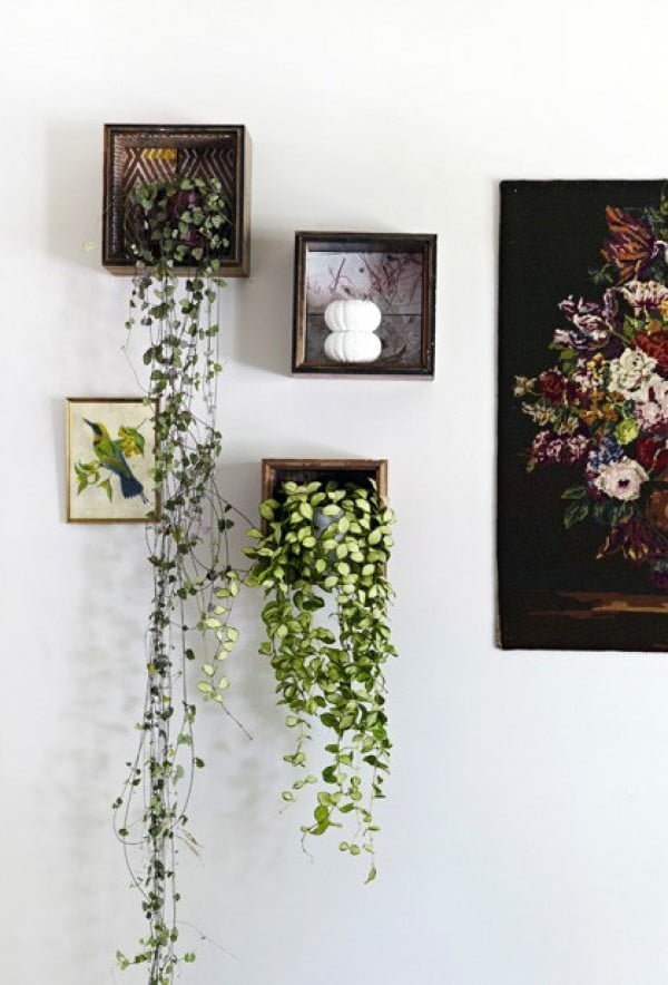 Love the idea for picture frame indoor vine planters