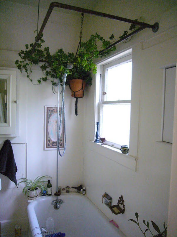 Love the idea to use the shower curtain rod as a trellis for indoor vine