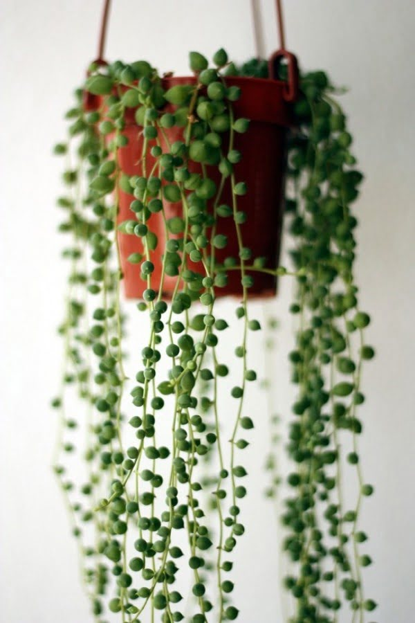 Find creative ways how to decorate your home with indoor vines