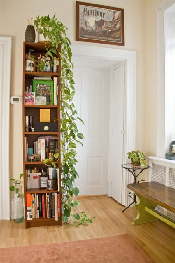 Nice idea to decorate a bookshelf with a vine plant