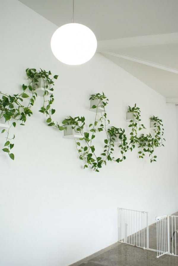 Create nice wall decoration patterns with suspended indoor vine wall planters
