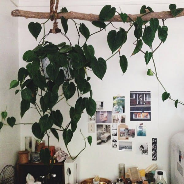 Love this rustic idea to decorate with indoor vine