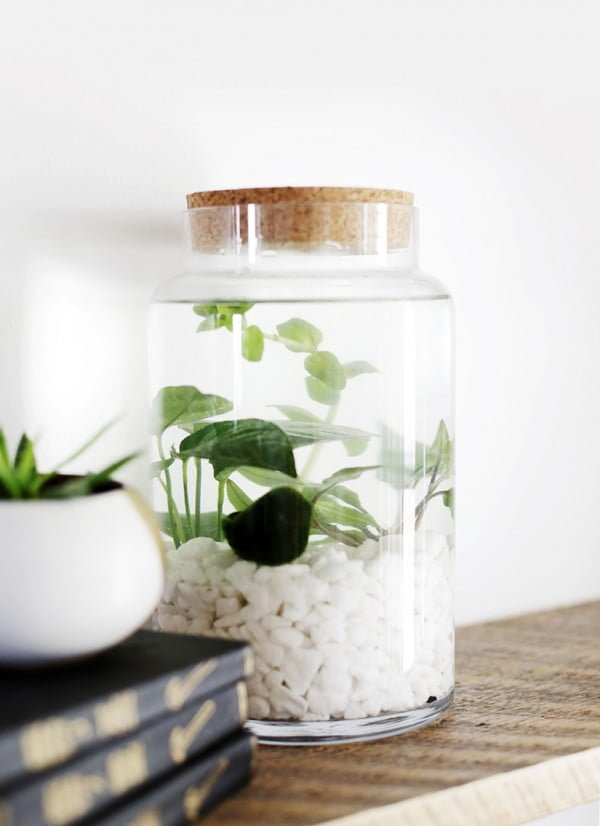Check out how to make a DIY indoor water planter