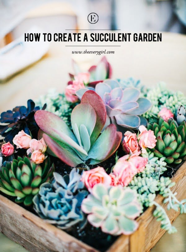 Check out how to create a DIY succulent garden