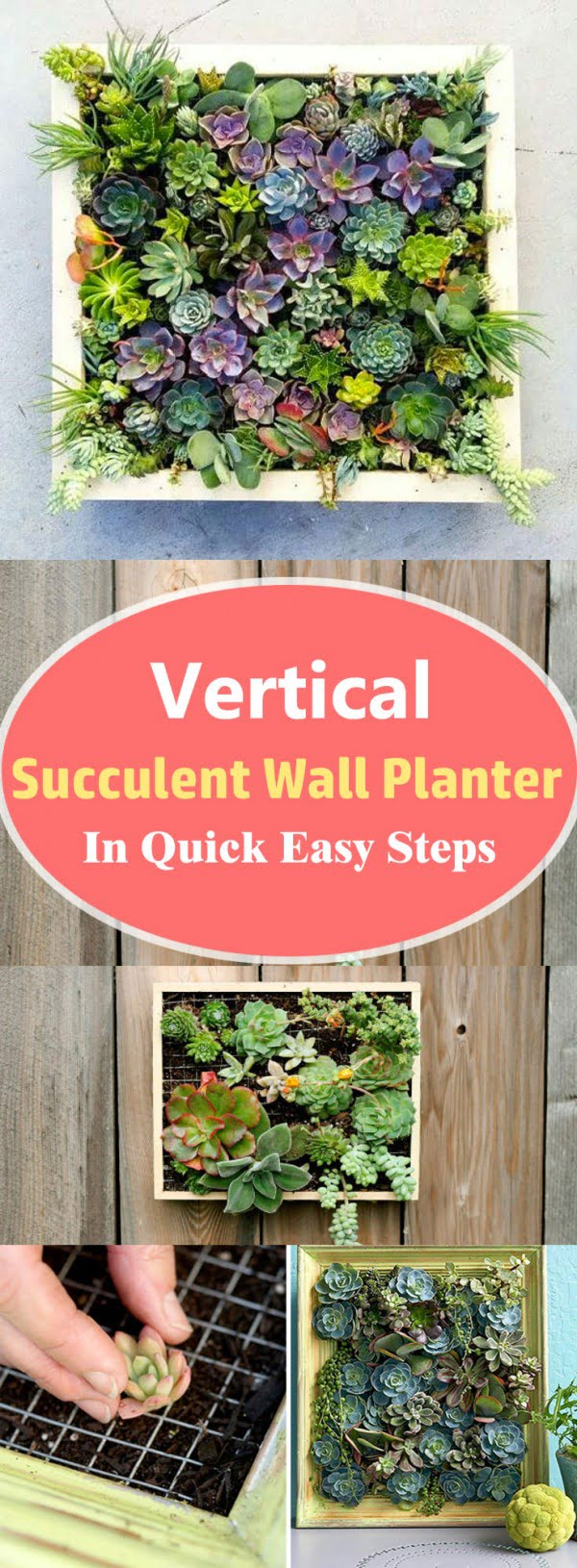 Check out how to make a DIY wall succulent planter