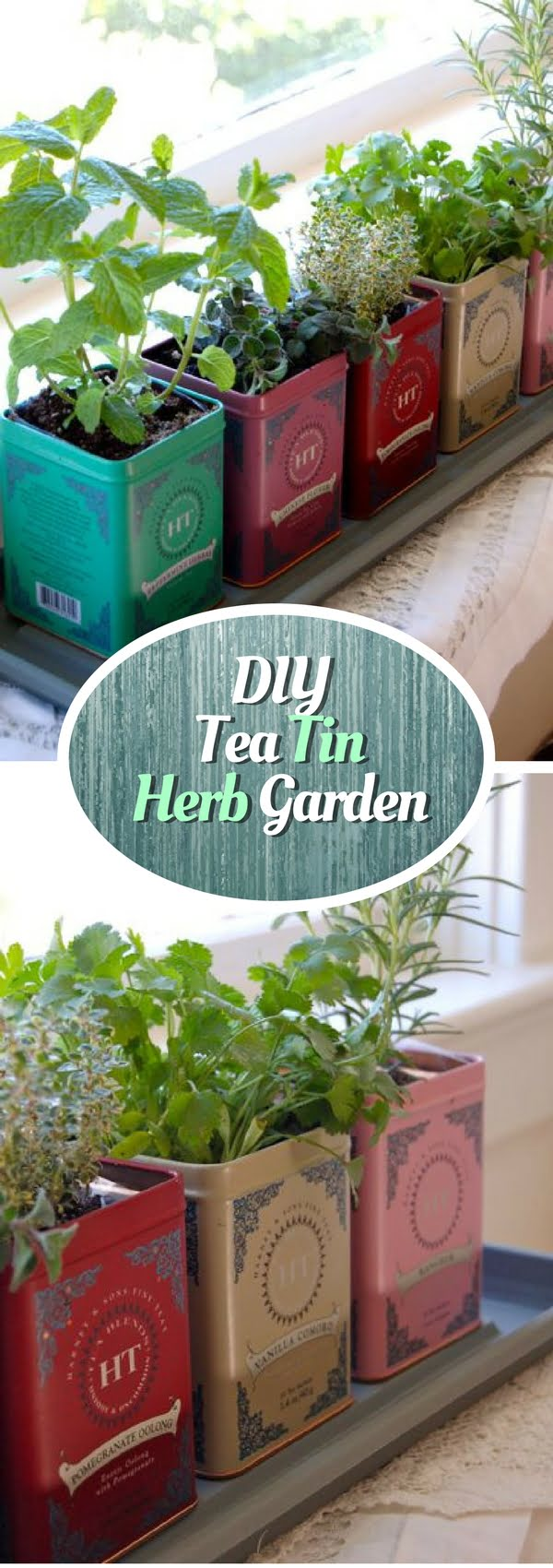 How to make a DIY herb garden form tea tin cans