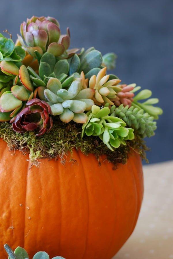 How to make a #DIY pumpkin succulent planter centerpiece #homedecor