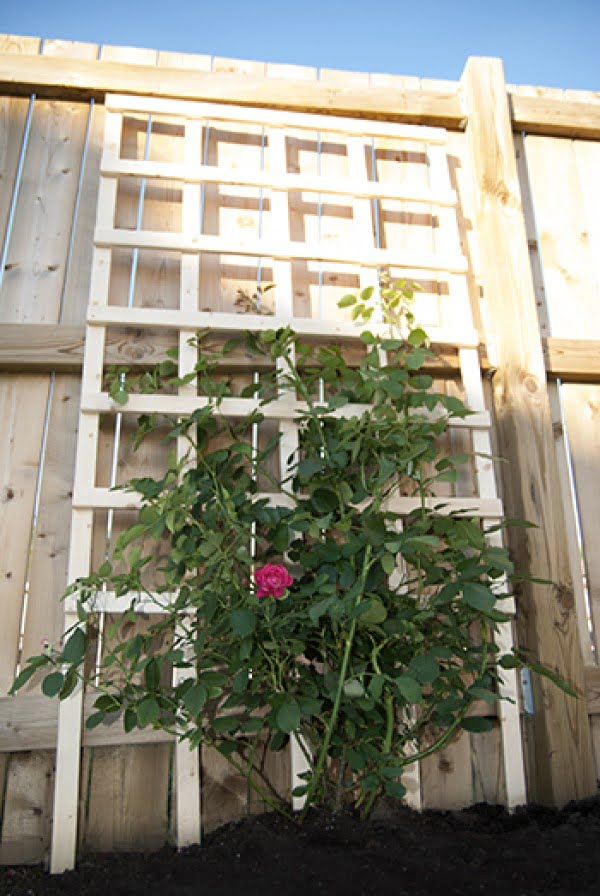 Check out the tutorial on how to build a simple DIY trellis for your garden