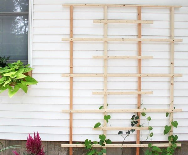 Check out how to build a simple DIY cedar lumber trellis for your backyard @istandarddesign