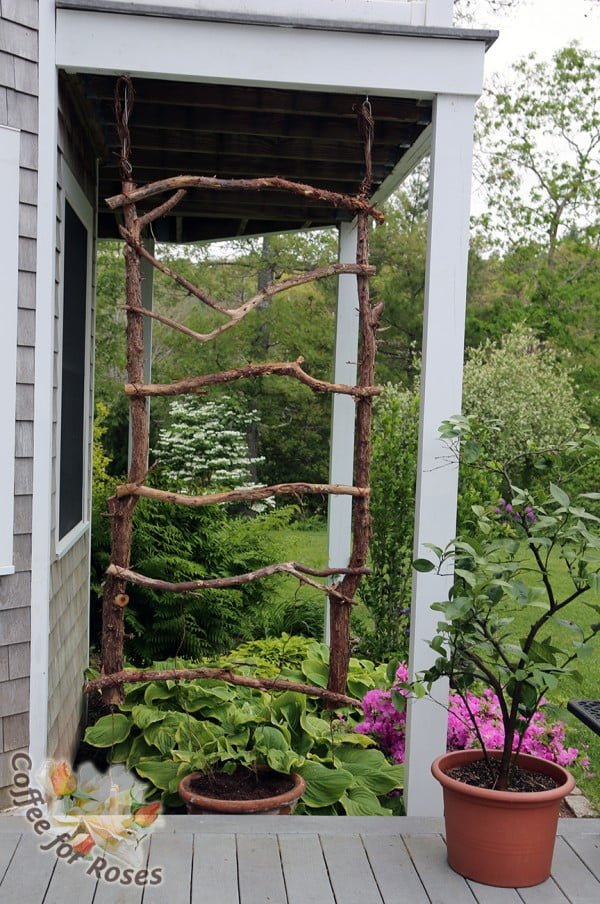 Check out how to build an easy DIY rustic trellis for annual vines
