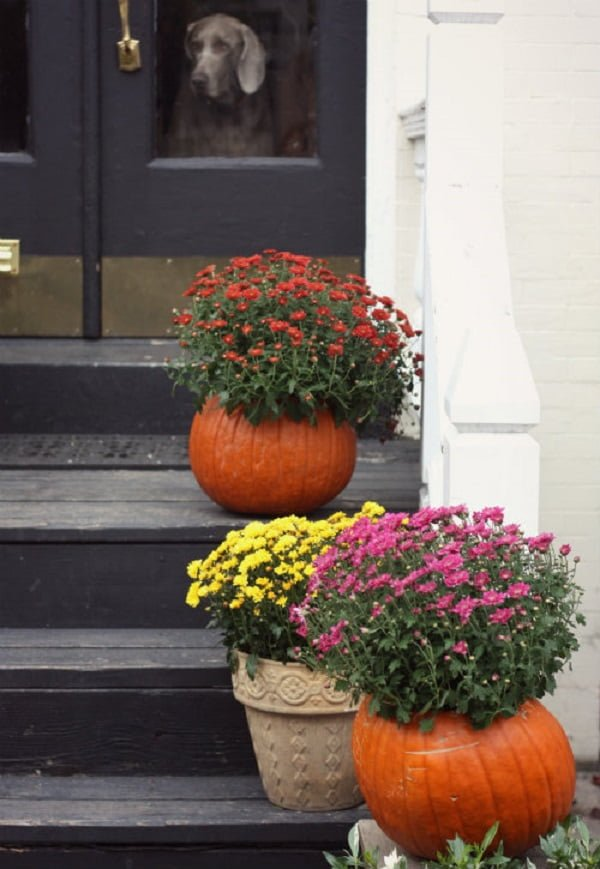 How to make  pumpkin planters for  decor