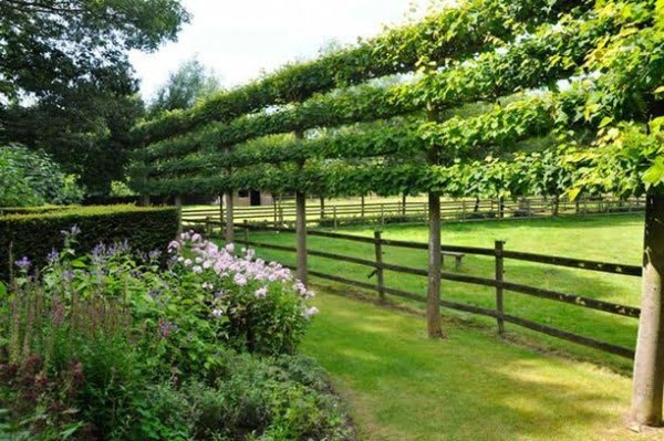 Tree Branch Trellis Large Garden Fence #garden