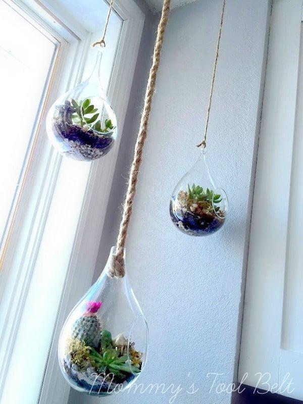 Hanging Globe Succulent Terrarium