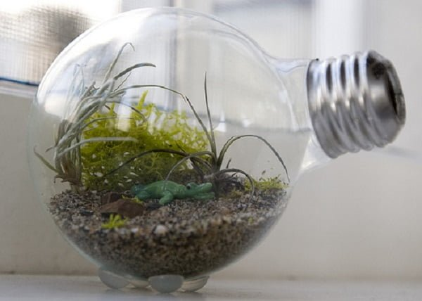 Tiny #DIY Succulent Terrarium in a Lightbulb #homedecor