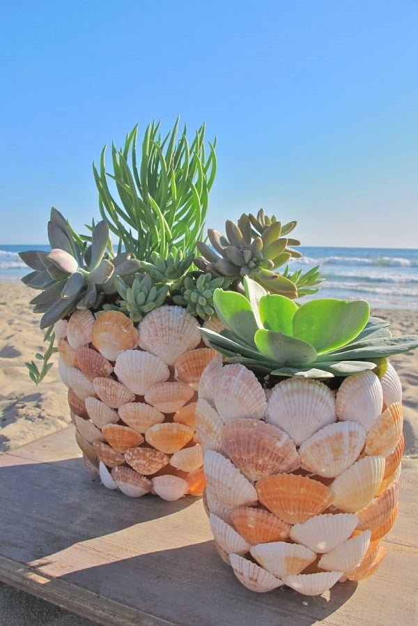 DIY Seashell Planters for a Succulent Garden