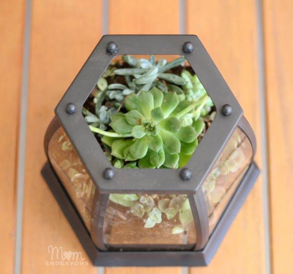 DIY Patio Tabletop Succulent Terrarium #homedecor