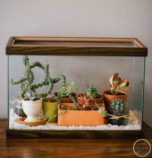 #DIY Succulent Terrarium from a Fish Tank #homedecor