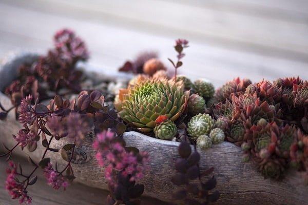 Rustic Succulent Garden Planter #gardendesign