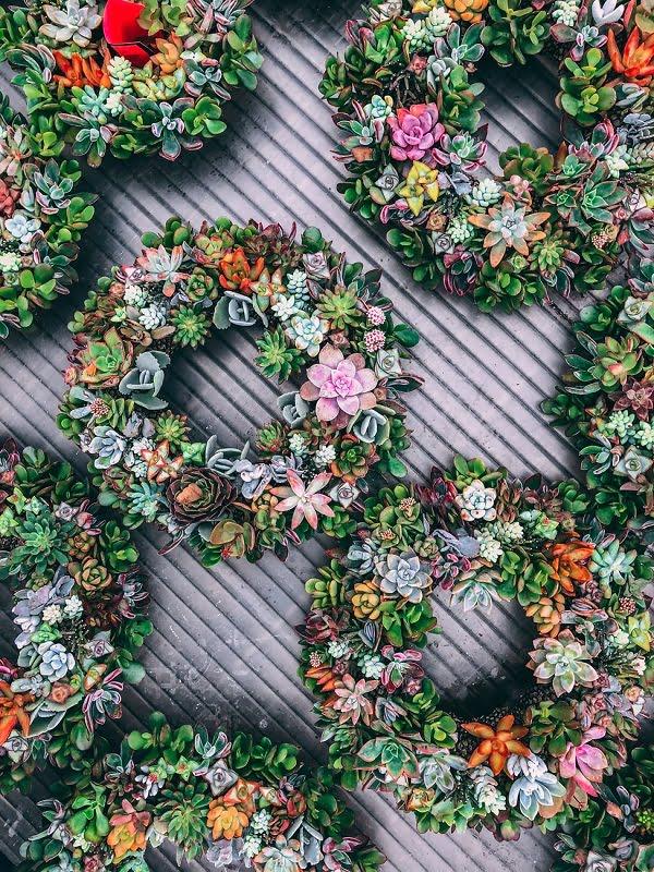Succulent Garden Circles #gardenideas
