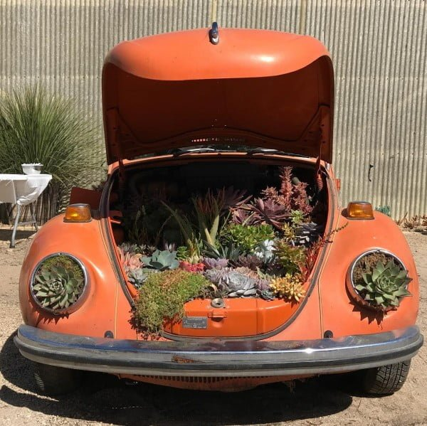 Old Car Succulent Garden