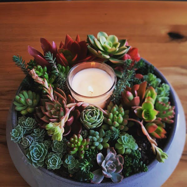 Indoor Succulent Centerpiece Garden