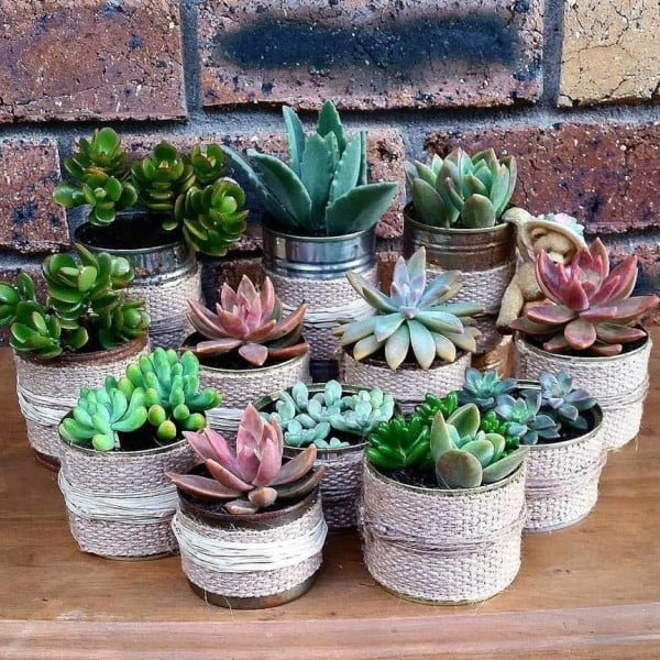 Rustic Tin Can Succulent Garden #gardendesign