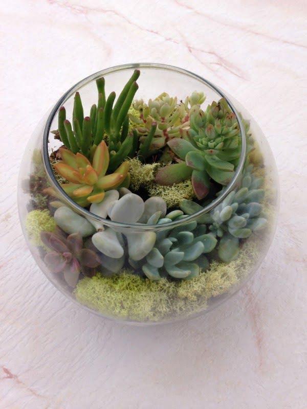 Fishbowl Succulent Garden #gardendesign