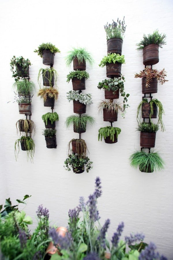 Suspended Wall Succulent Garden #gardendesign
