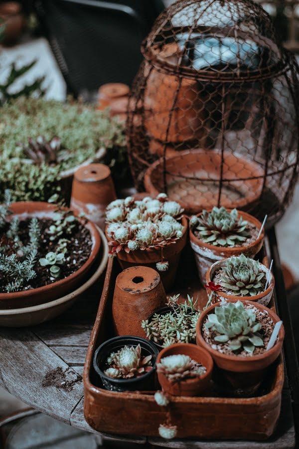 Terra Cotta Succulent Garden #gardendesign