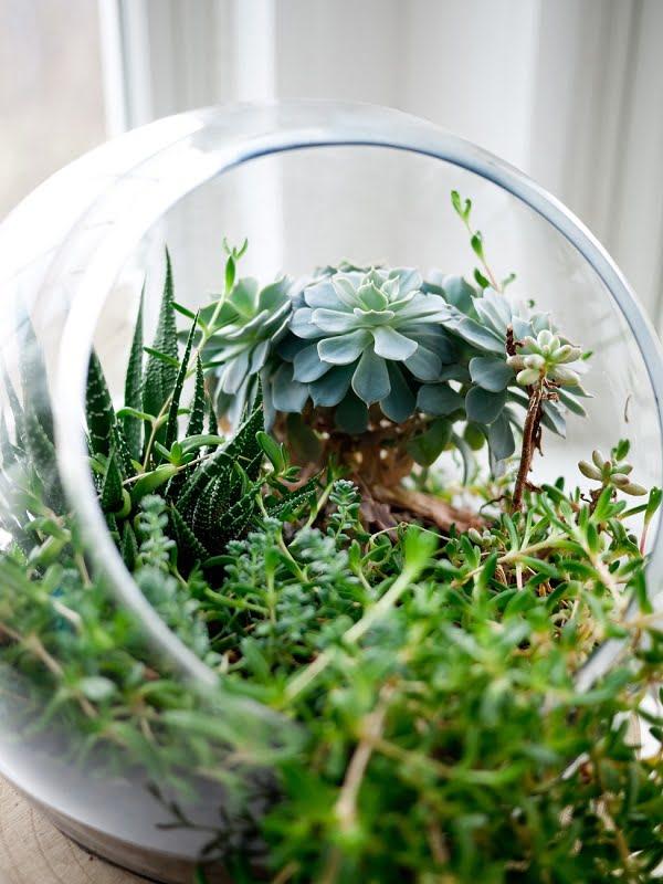Terrarium Succulent Garden #gardendesign