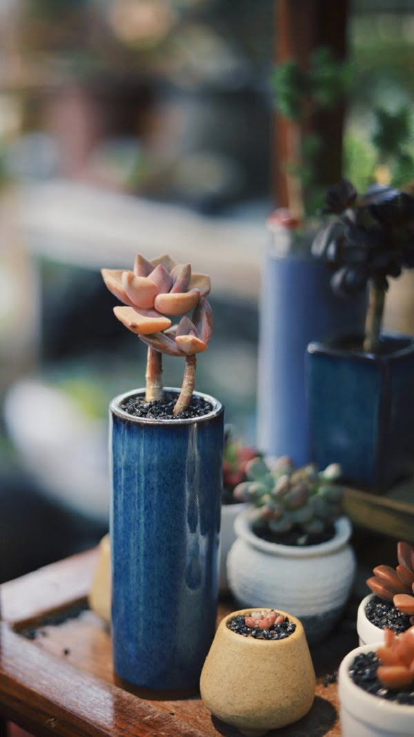 Tube Succulent Planters for Your Garden
