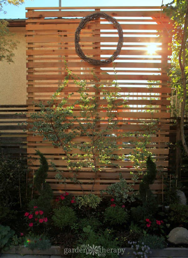 A DIY Espalier Privacy Screen for the Backyard - Garden Therapy