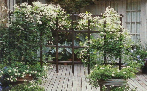 A Privacy Trellis You Really Can DIY - The Good Men Project