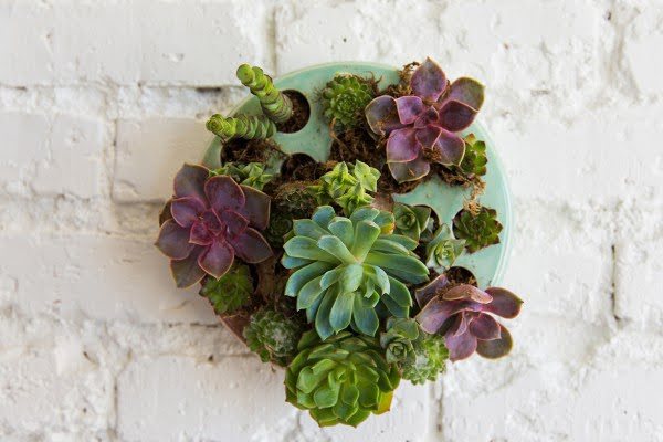 DIY succulent wall planter (& video)