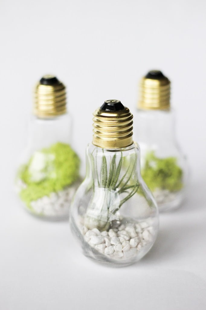 Light Bulb Terrarium #DIY #homedecor #craft #repurpose