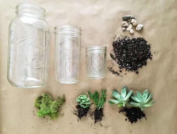 Succulent Plants in Mason Jars: How to Make a Perfect Hostess Gift