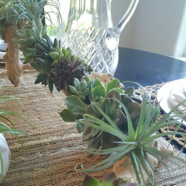 Succulent DIY Driftwood Planter