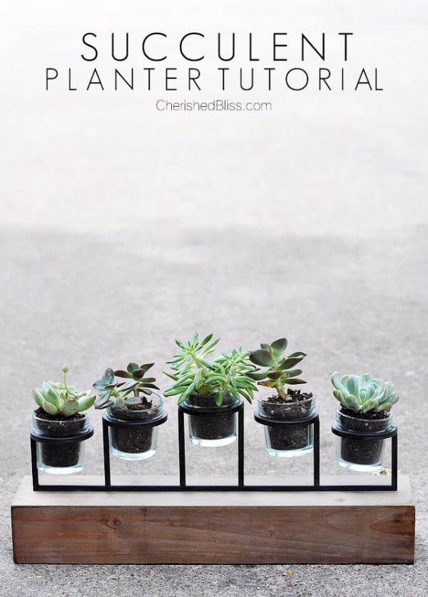 DIY Succulent Planter Tutorial