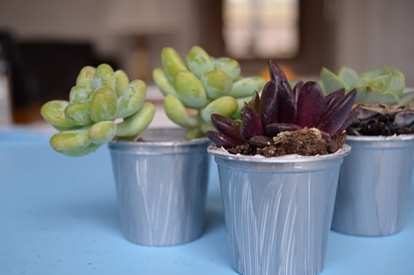 How to Turn Your K-Cups Into Pots for Your Succulents