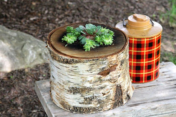 How To Make A Succulent Log Planter: Lumberjack Not Required