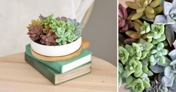 Grow a Rainbow: DIY Succulent Planter -