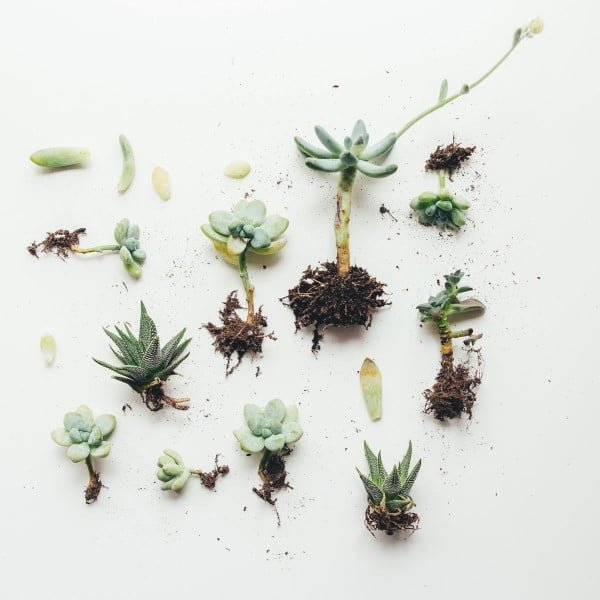 DIY a Sweet Wooden Succulent Planter!