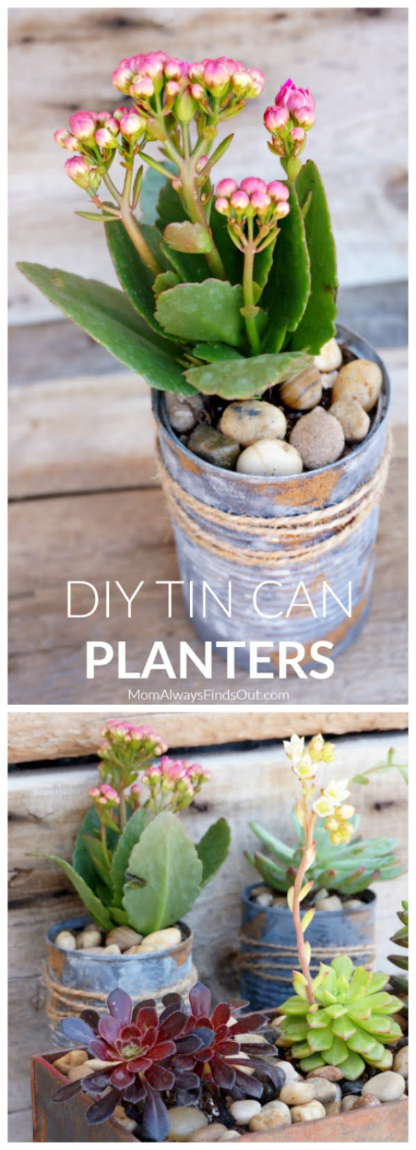 DIY Tin Can Planters Perfect For Succulents, Small Plants, and Flowers #DIY #homedecor #tincan #crafts #repurpose #upcycle