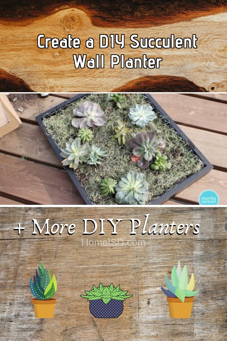 Create a DIY Succulent Wall Planter