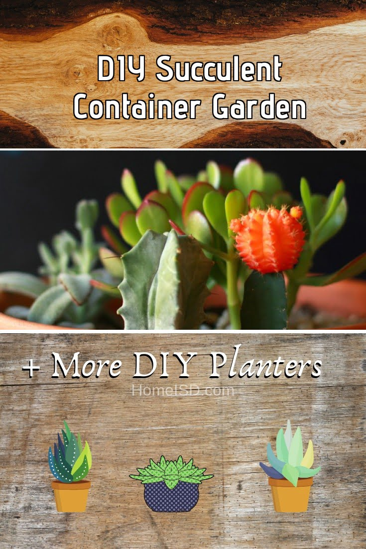 DIY Succulent Container Garden